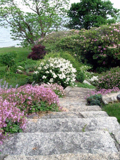 Landscaped Outdoor Staircase in Swampscott MA