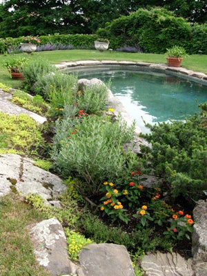 Poolside Landscaping in Swampscott MA with flowers and bushes