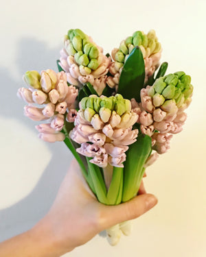 Bunch of Hyacinth