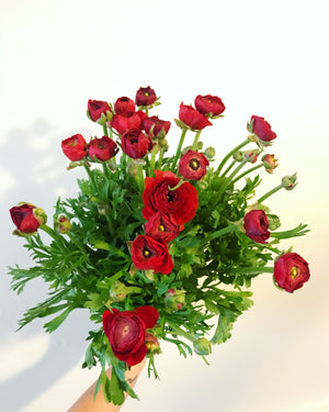 Bunch of Ranunculus