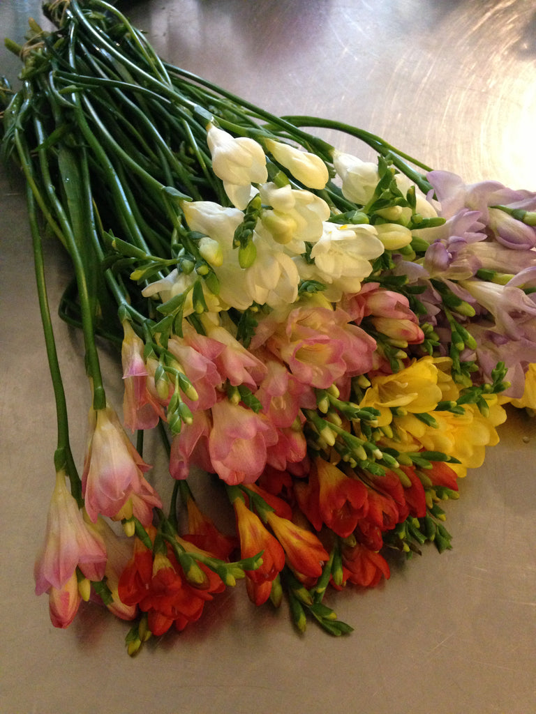 Bunch of Freesia