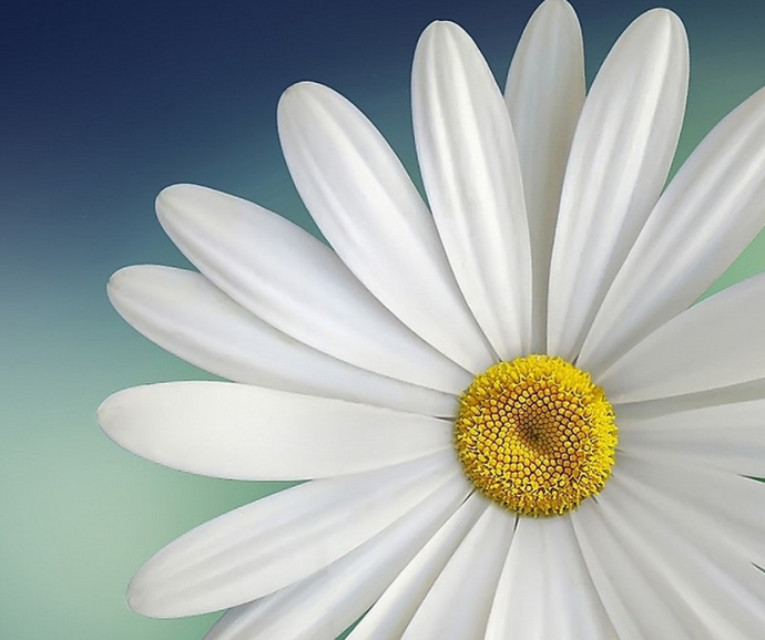 Staffordshire Art Workshops Now Open for Bookings! Starting with our Wall Art Daisy