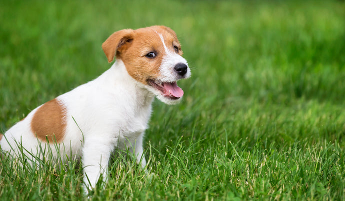 No More Plastic? What to Do With Your Pet's Poop
