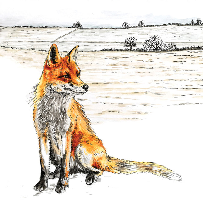 Gazing Fox Greeting Card and Gift by Catherine Cook