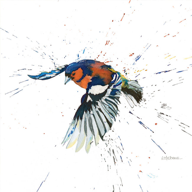 Chaffinch in Flight Greeting Card and Gift by Jackie Hichens