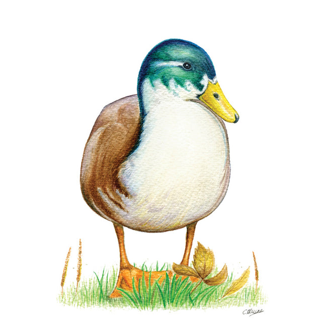 The Well Fed Duck Greeting Card and Gift by Christina Quine