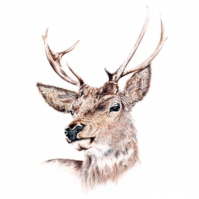 Mr Stag Greeting Card and Gift by Nadine Sutterby