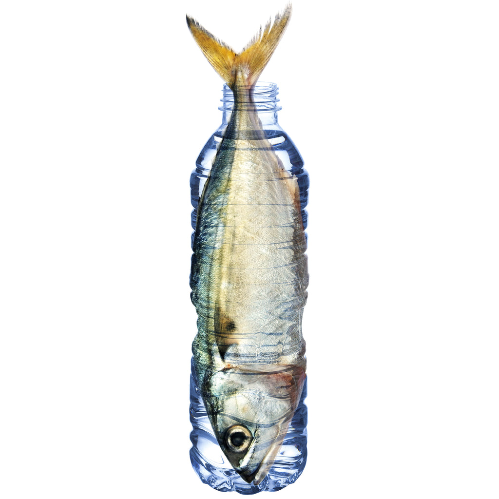 Fish in a bottle Earth Day Campaign | PATHWATER