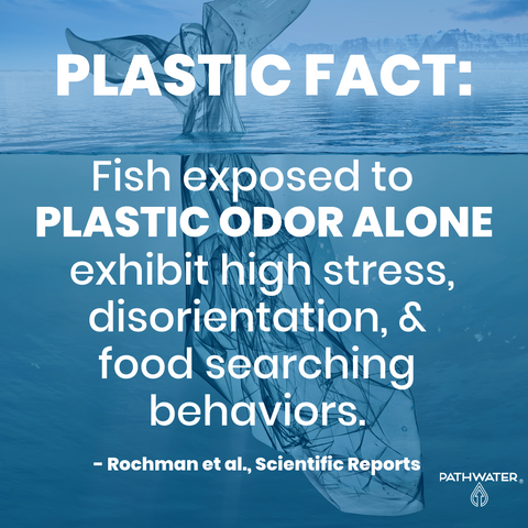 Fish exposed to plastic odor alone exhibited high stress, disorientation and food searching behaviors.