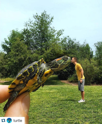 Test your Turtle Knowledge this World Turtle Day® with the
