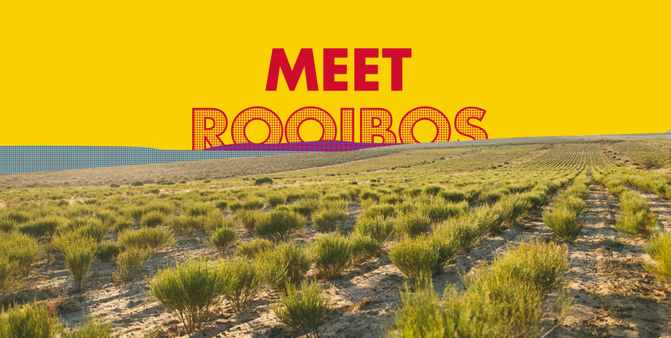 "<img src=""meetrooibos.png"" alt=""Cederberg Mountains where rooibos grows"">"