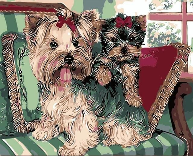 paint by numbers | Yorkshire terriers on Sofa | animals dogs intermediate | FiguredArt