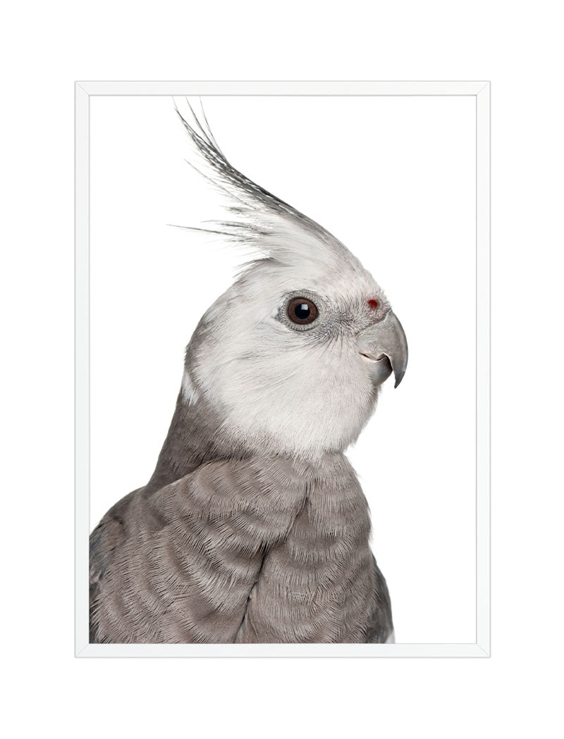 COCO the Cockatiel