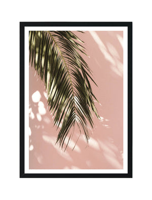 Palm by Pink Wall