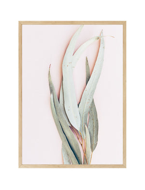 Eucalyptus on Pink II