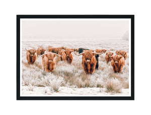 HighLand Cow Tribe