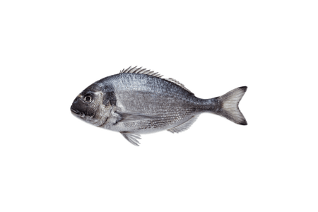 Seabream (Cleaned) | Eatoo UK