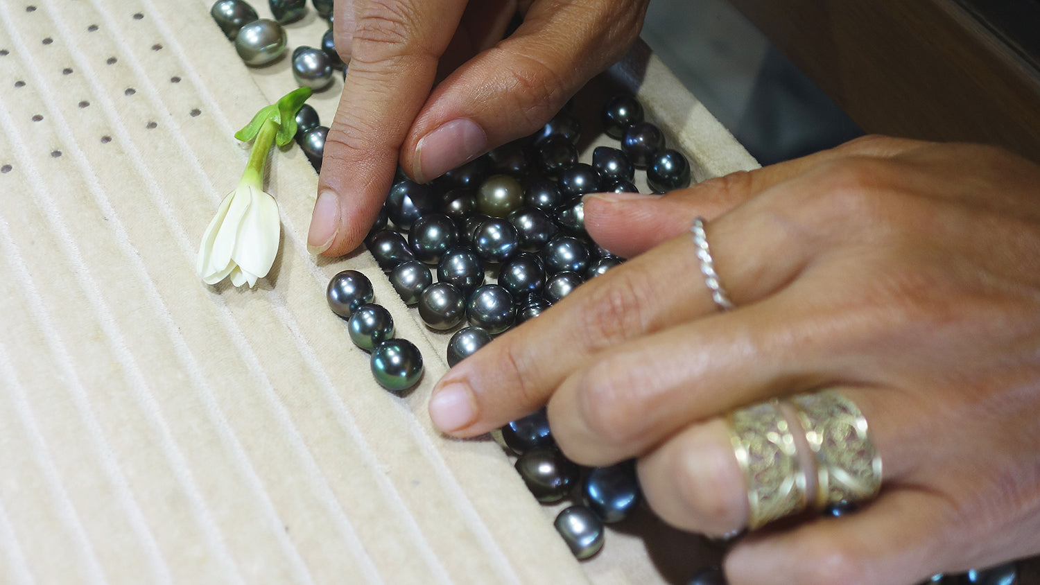Pearls in Paradise: Arabel's Trip to an Eco-Friendly Polynesian Pearl Farm