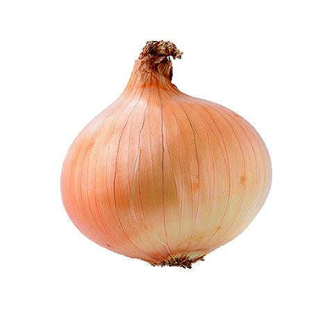 Large Yellow Onion, Organic