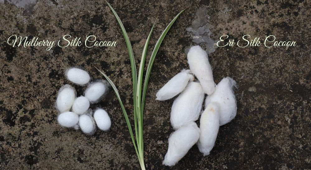 Difference between Mulberry and Eri cocoons - Muezart
