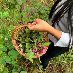 collecting wild saphire berries for natural dyes