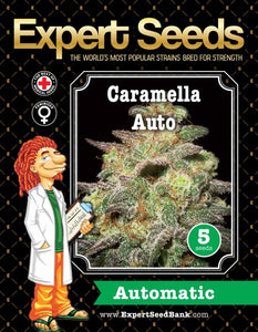 Expert Seeds - Caramella Auto flowering (1 seed)