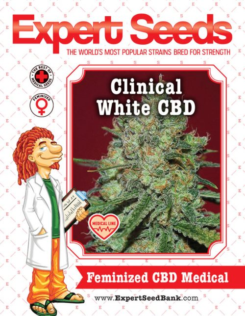 Expert Seeds - Clinical White CBD Feminised (1 seed)
