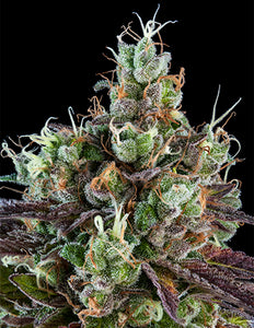 Ripper Seeds - Sour Ripper Feminised Photoperiod (1 seeds)