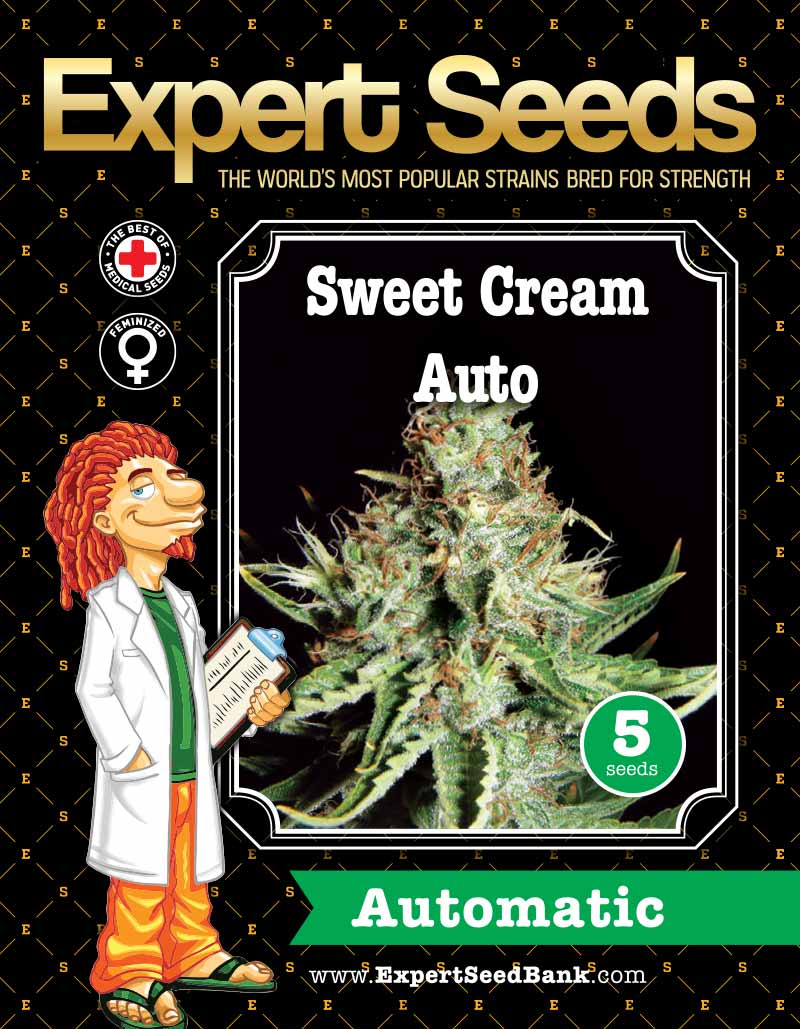Expert Seeds - Sweet Cream Auto flowering (1 pack)