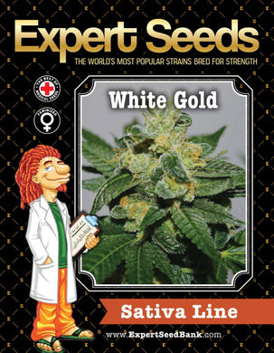 Expert Seeds - White Gold Feminised (1 pack)