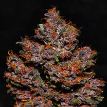 Load image into Gallery viewer, Crystal M.E.T.H is a potent almost psychedelic strain depicted with dark buds and dark orange pistils