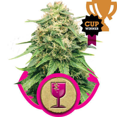 Royal Queen Seeds - Critical Feminised (3 pack)