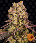 Barney's Farm - Runtz Muffin Feminised Photoperiod  (3 seeds)