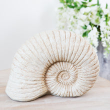 Load image into Gallery viewer, Ammonite Shell