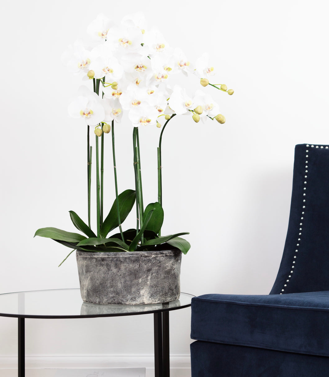 Orchid in Stone Pot (January Delivery) Ex Display
