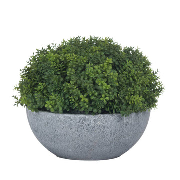 Potted Hebe Bowl