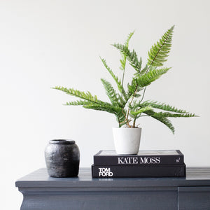 Fern in Pot