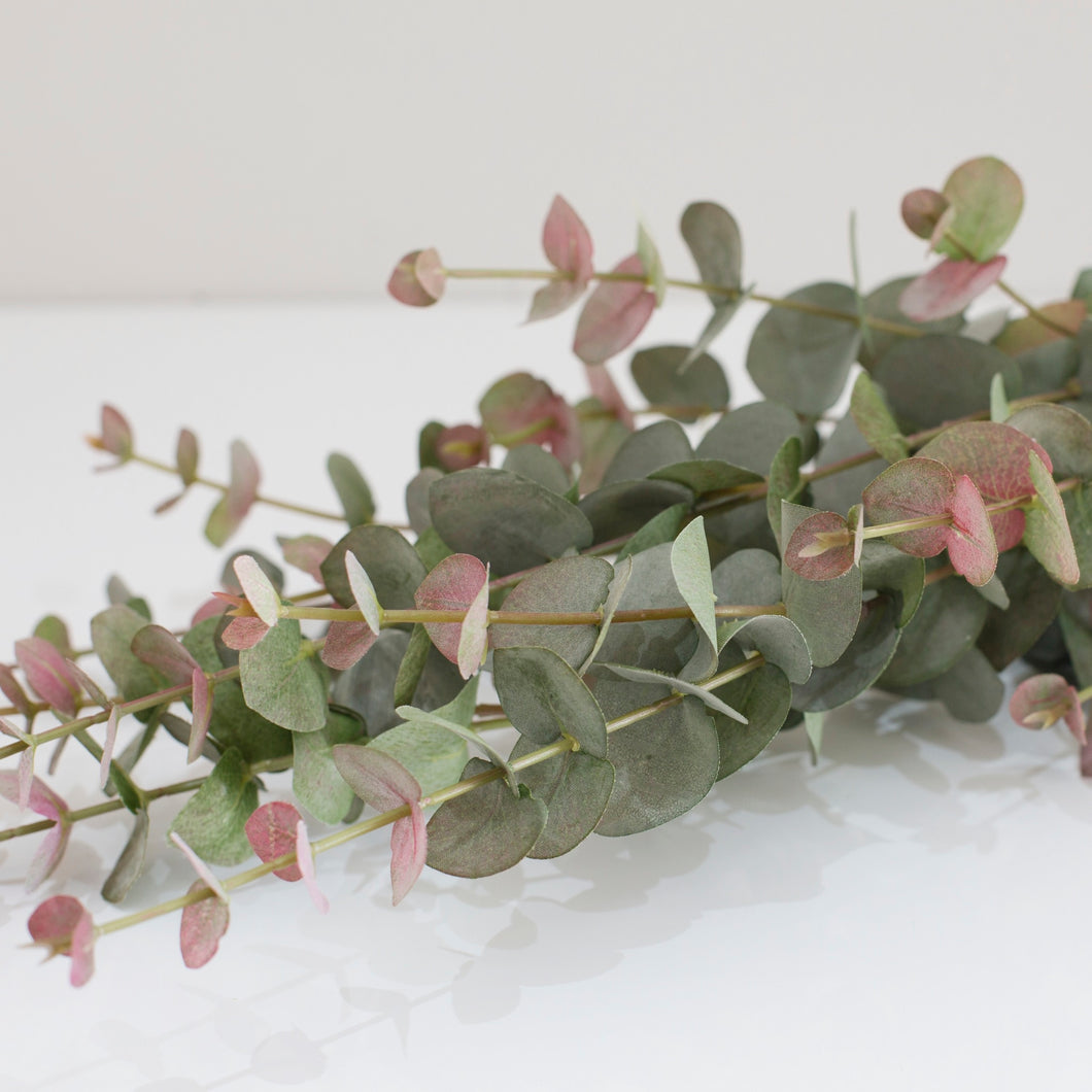 Blush Eucalyptus Stem