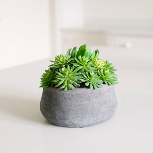 Echiveria In Dark Grey Pot