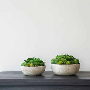 Mixed Echiveria Bowl (Available in Two Sizes)