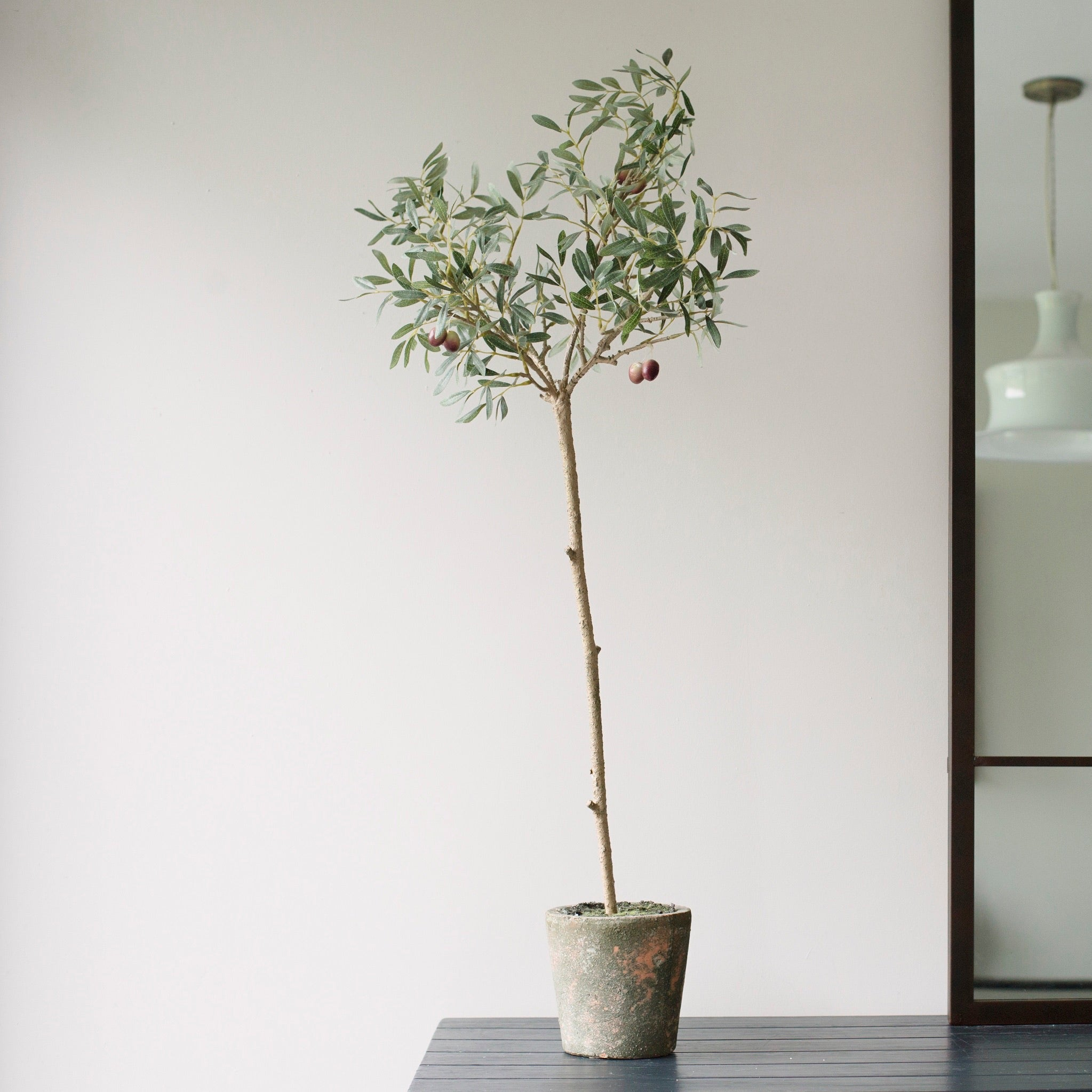 Olive Tree in Garden Pot