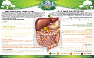 BOWEL TOXEMIA: CAUSE & CURE
