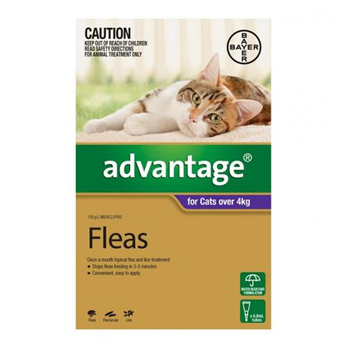 Bayer Advantage For Cats Over 4Kg (Purple) - 1s | Choice Vet Pharmacy