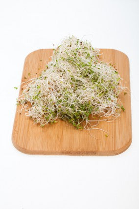 Sprouts - Alfalfa Sprouts