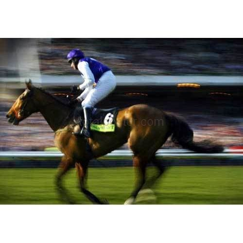 Barry Geraghty | Horse Racing  Posters | TotalPoster