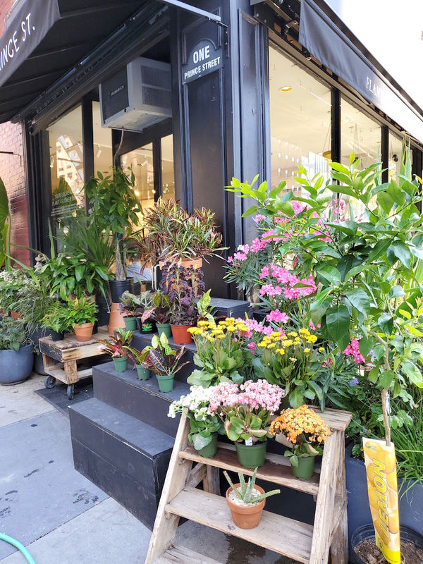 A Dreamy Coffee Shop Inside The Cutest Flower Bodega