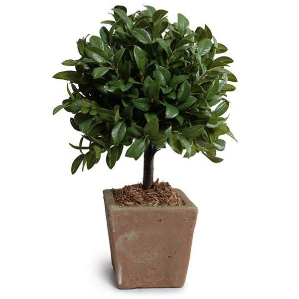 Laurel Leaf Topiary in Terracotta