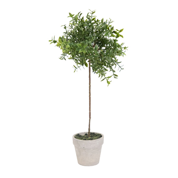 Miniature Boxwood Topiary