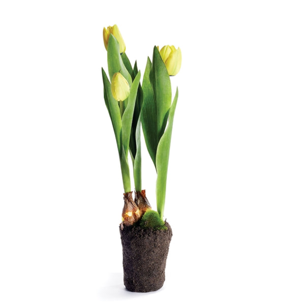 Yellow  Tulip 18''
