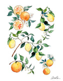 Citrus Blossoms by Inslee Fabric by the Yard